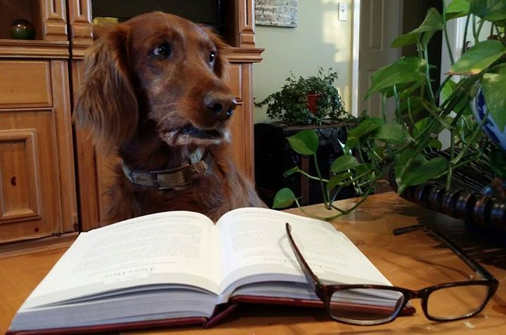 """What? I like to read just as much as the next dog."""